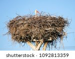 Small photo of nest in the incubation female stork