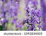 sunset over a violet lavender... | Shutterstock . vector #1092834005