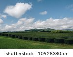 the tea plantation in north of... | Shutterstock . vector #1092838055