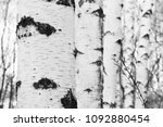 black and white photo with... | Shutterstock . vector #1092880454
