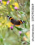Small photo of Admiral, Pyrameis atalanta on a green meadow, butterfly in spring.