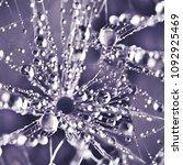 dandelion in droplets  macro | Shutterstock . vector #1092925469