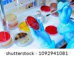 petri dish. microbiological... | Shutterstock . vector #1092941081