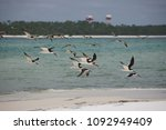 Small photo of Skimmers come in for a landing near Pensacola Naval Air Station