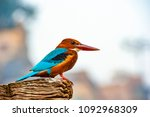 beautiful and colourful ...   Shutterstock . vector #1092968309