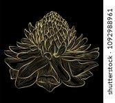 beautiful ginger flower... | Shutterstock .eps vector #1092988961