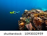 freediver swims underwater near ... | Shutterstock . vector #1093032959