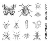 different kinds of insects... | Shutterstock . vector #1093077044