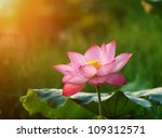 Lotus Flower Blossom In The...