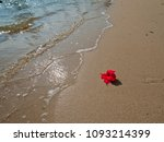 red flower on yellow sand and... | Shutterstock . vector #1093214399