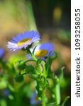 Small photo of Beautiful blurred background.purple flowers with blur background.blur image style.