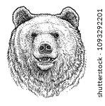 bear head illustration  drawing ... | Shutterstock .eps vector #1093292201