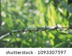barbed in the shoulder | Shutterstock . vector #1093307597