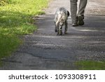 walking man's feet and hunting...   Shutterstock . vector #1093308911