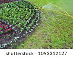 watering the lawn and flowerbed ... | Shutterstock . vector #1093312127
