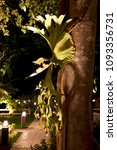 Small photo of The staghorn fern adhere to a big tree that beside the way in the night. There is light cause shadow of leaves.