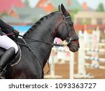horse in jumping tournament ... | Shutterstock . vector #1093363727