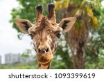 close up of the head of a...   Shutterstock . vector #1093399619
