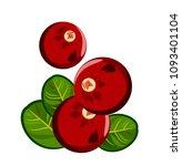 ripe  red cranberries  doodle  | Shutterstock .eps vector #1093401104