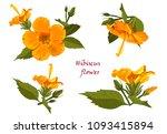 set of yellow hibiscus flowers...   Shutterstock .eps vector #1093415894
