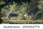 giraffe and african bush... | Shutterstock . vector #1093562774