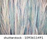 Bamboo Grass  Tiger Grass ...