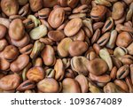 broad beans or fava beans as a... | Shutterstock . vector #1093674089