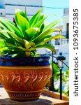 beautiful ceramic flower pot on ...   Shutterstock . vector #1093675385