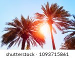 silhouettes of palm trees... | Shutterstock . vector #1093715861