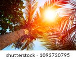 silhouettes of palm trees... | Shutterstock . vector #1093730795