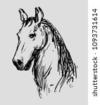 Stock vector hand drawn horse head sketch of horse portrait 1093731614