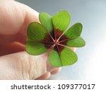 Four Leaf Clover Good Luck