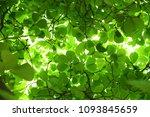 Tree Green Leaf Backlit...