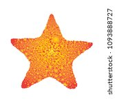 the figure of a starfish.... | Shutterstock . vector #1093888727