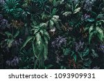 beautiful nature background of... | Shutterstock . vector #1093909931