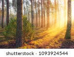summer forest landscape with... | Shutterstock . vector #1093924544