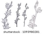 two spring tree twigs. hand...   Shutterstock .eps vector #1093980281