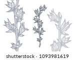 branch of spring plant with... | Shutterstock .eps vector #1093981619