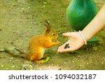 Squirrel Eats Sunflower Seeds...