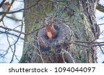 Squirrel In It S Tree Cave