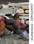free range chickens in field | Shutterstock . vector #1094124947