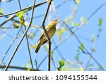 thrush nightingale  bird. | Shutterstock . vector #1094155544