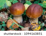 Porcini Autumn In The Forest....
