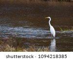 ardea alba linnaeus | Shutterstock . vector #1094218385