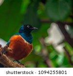 deep blue  orange  and white... | Shutterstock . vector #1094255801