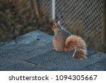 A Squirrel In Stratford Ontario ...