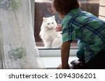 a white cat with blue eyes... | Shutterstock . vector #1094306201