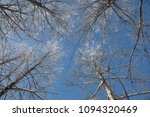 snow on branches against the... | Shutterstock . vector #1094320469