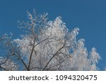 snow on branches against the... | Shutterstock . vector #1094320475