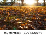 fallen trees in autumn in the... | Shutterstock . vector #1094320949